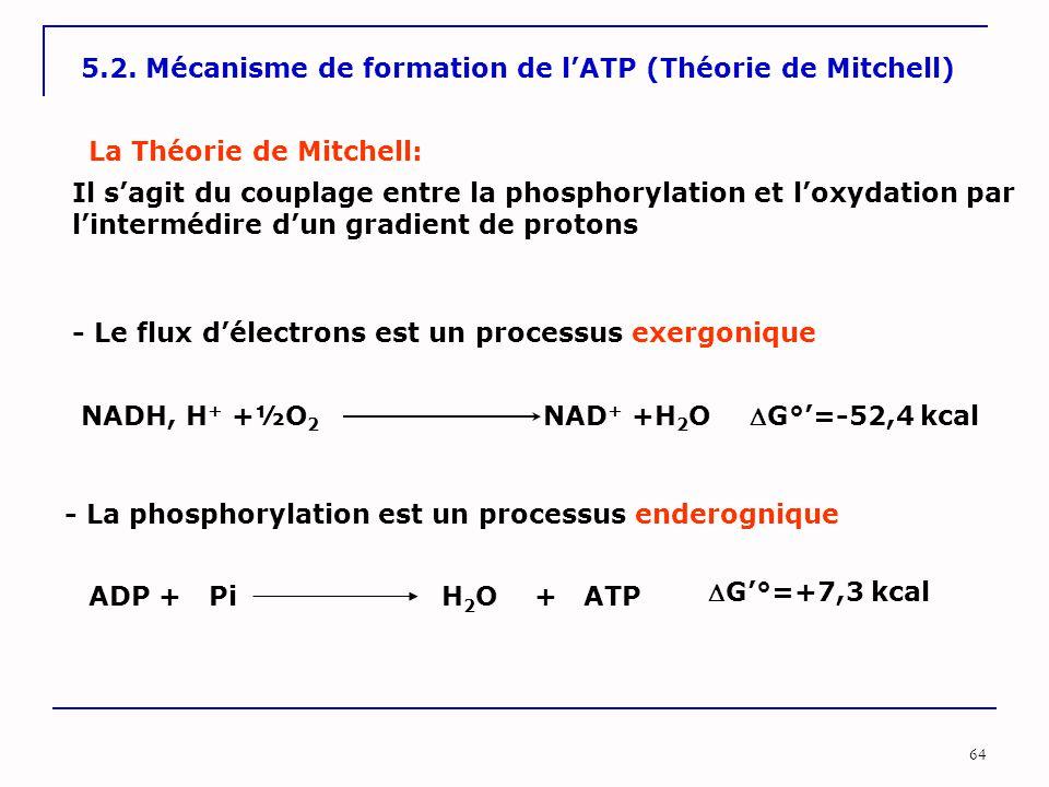 5.2. Mécanisme de formation de l'ATP (Théorie de Mitchell)