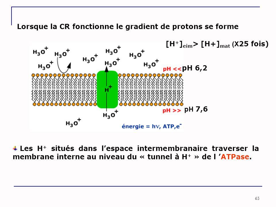 Lorsque la CR fonctionne le gradient de protons se forme
