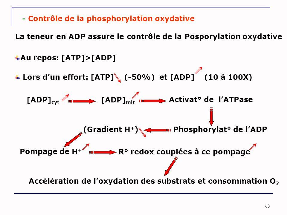- Contrôle de la phosphorylation oxydative