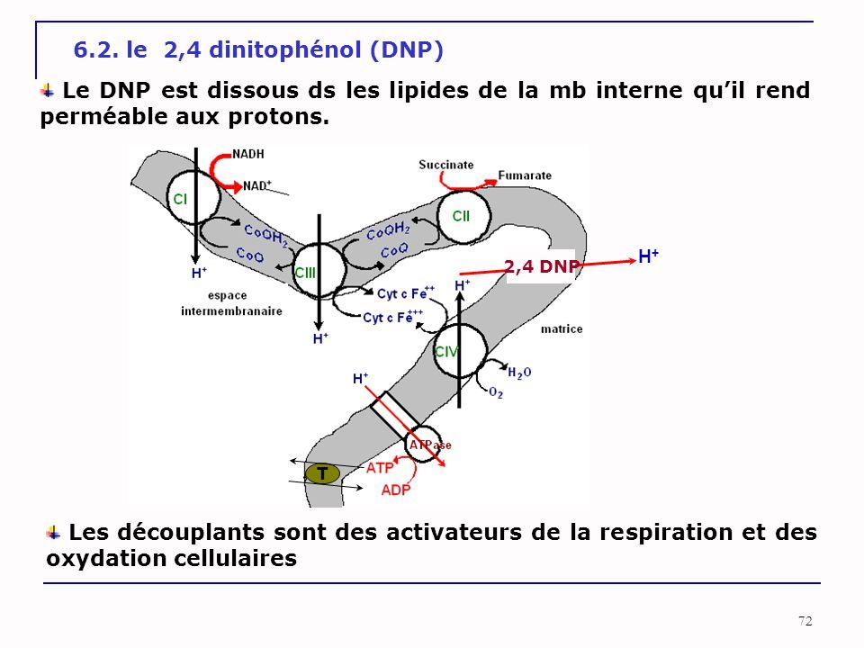 6.2. le 2,4 dinitophénol (DNP) Le DNP est dissous ds les lipides de la mb interne qu'il rend perméable aux protons.