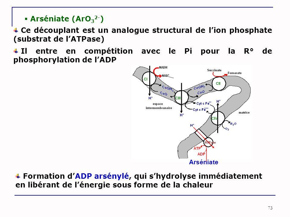Arséniate (ArO32-) Ce découplant est un analogue structural de l'ion phosphate (substrat de l'ATPase)