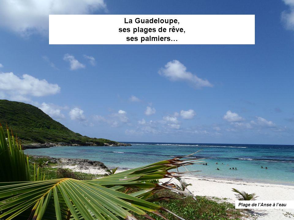 La Guadeloupe, ses plages de rêve, ses palmiers…
