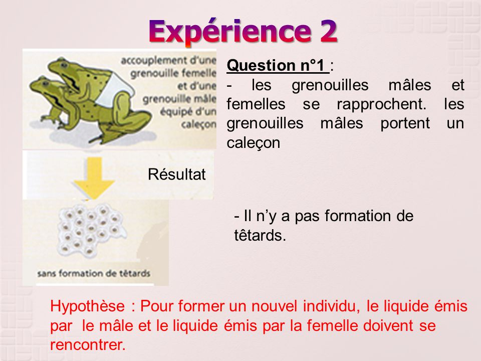Expérience 2 Question n°1 :