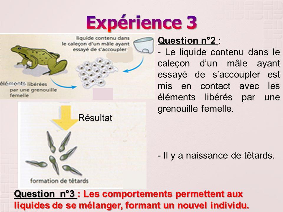 Expérience 3 Question n°2 :