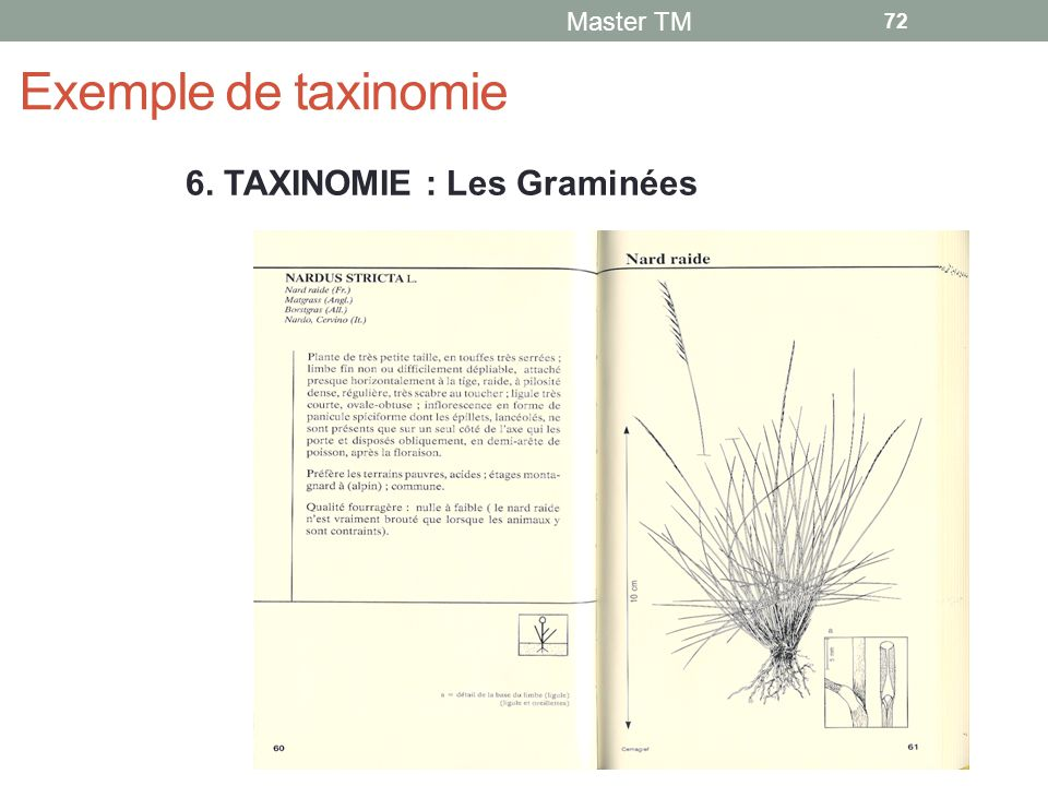 Exemple de taxinomie 6. TAXINOMIE : Les Graminées Master TM