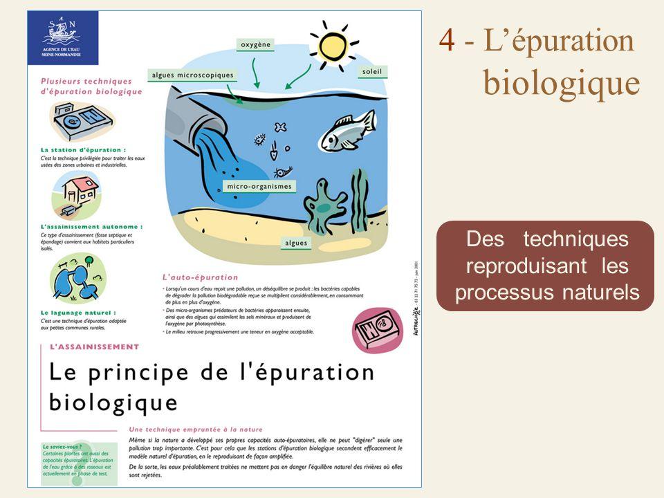 4 - L'épuration biologique