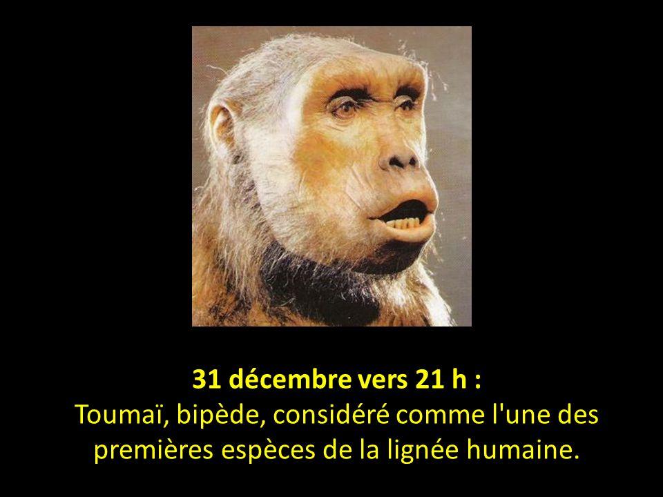 31 décembre vers 21 h : Toumaï, bipède, considéré comme l une des premières espèces de la lignée humaine.
