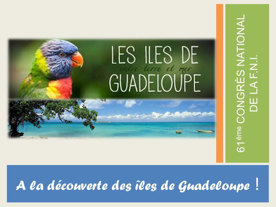 A la découverte des îles de Guadeloupe !