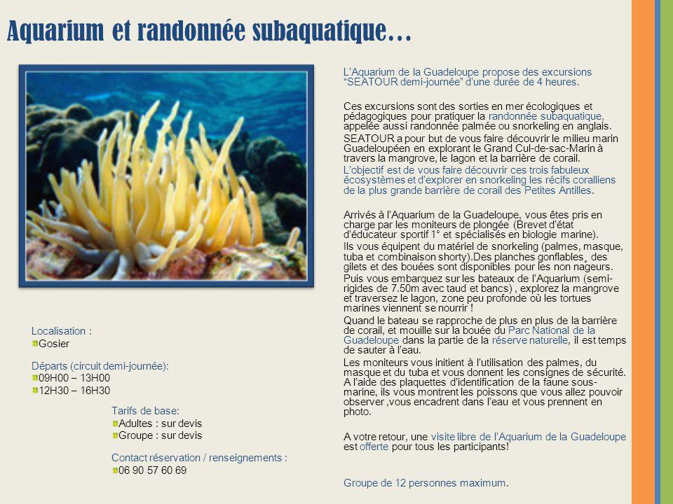Aquarium et randonnée subaquatique…