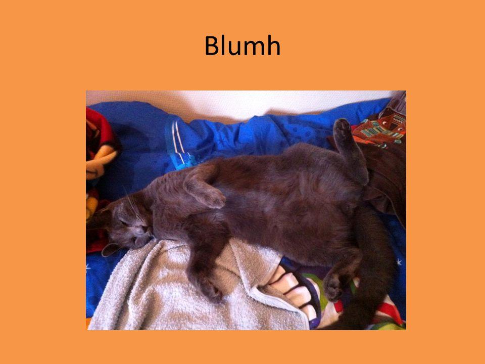 Blumh