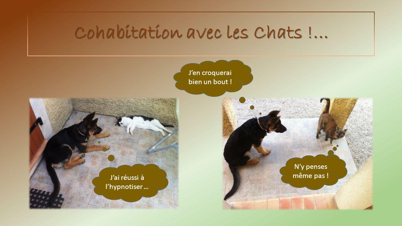 Cohabitation avec les Chats !...