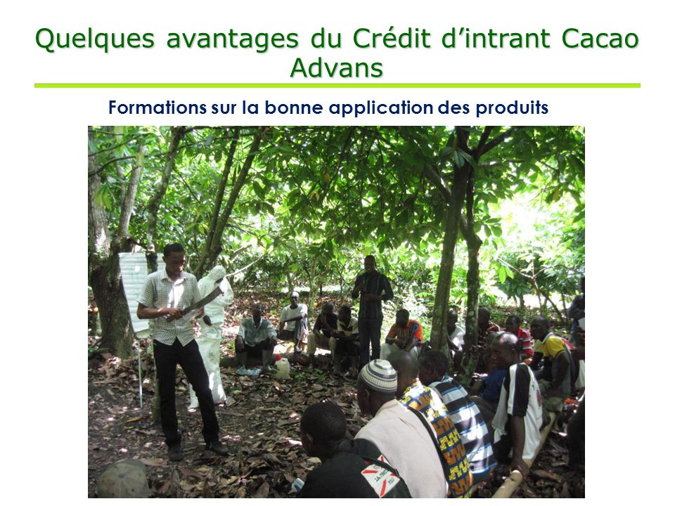 Quelques avantages du Crédit d'intrant Cacao Advans