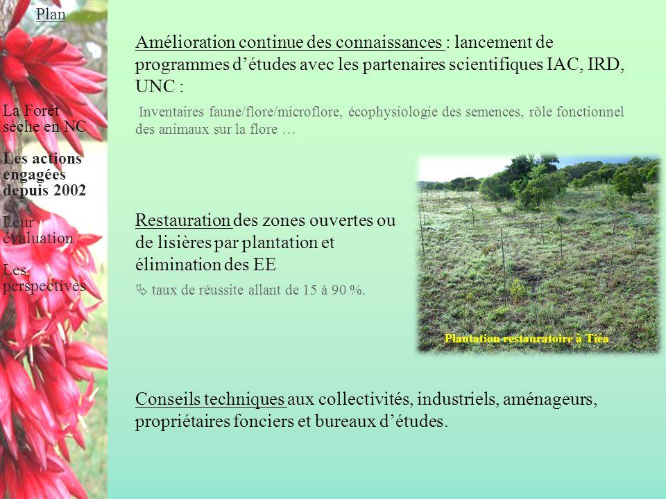 Plantation restauratoire à Tiéa