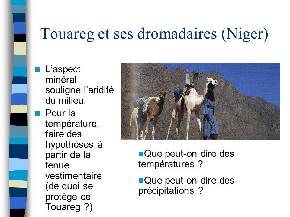 Touareg et ses dromadaires (Niger)