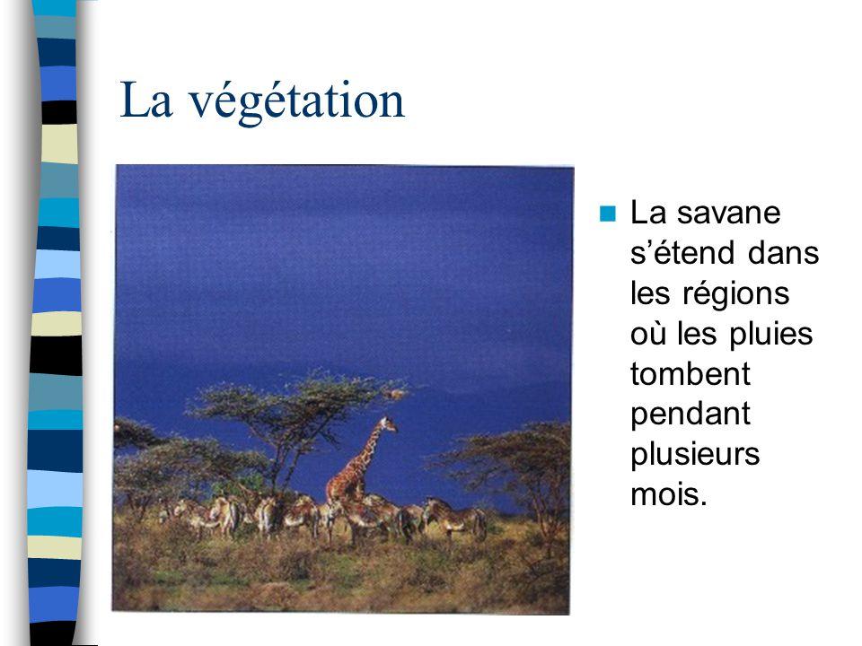 La végétation La savane s'étend dans les régions où les pluies tombent pendant plusieurs mois.