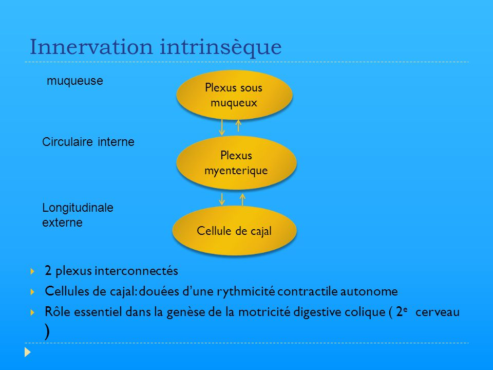 Innervation intrinsèque