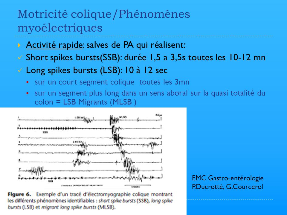 Motricité colique/Phénomènes myoélectriques