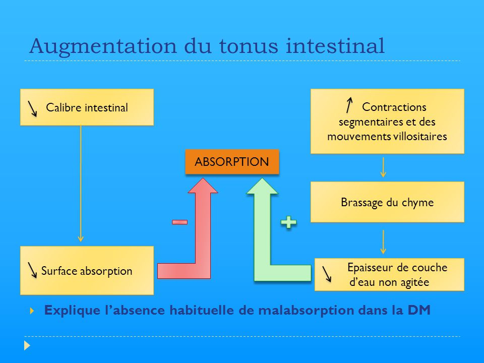Augmentation du tonus intestinal