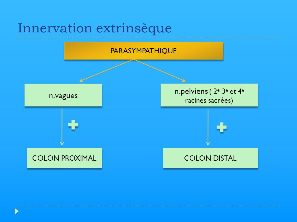 Innervation extrinsèque