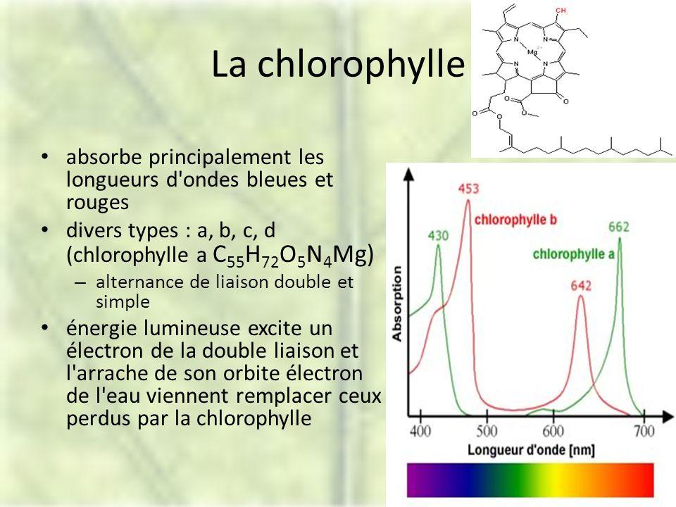 La chlorophylle absorbe principalement les longueurs d ondes bleues et rouges. divers types : a, b, c, d (chlorophylle a C55H72O5N4Mg)