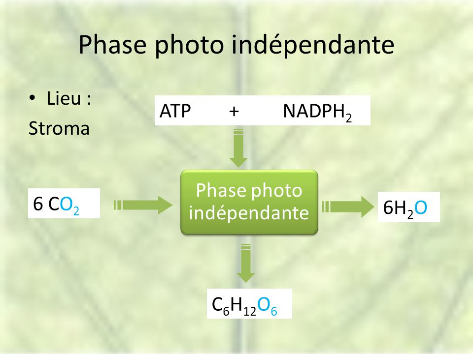 Phase photo indépendante