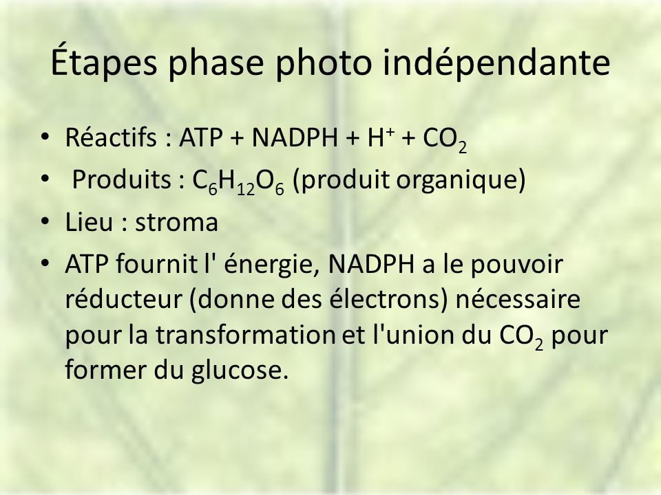 Étapes phase photo indépendante