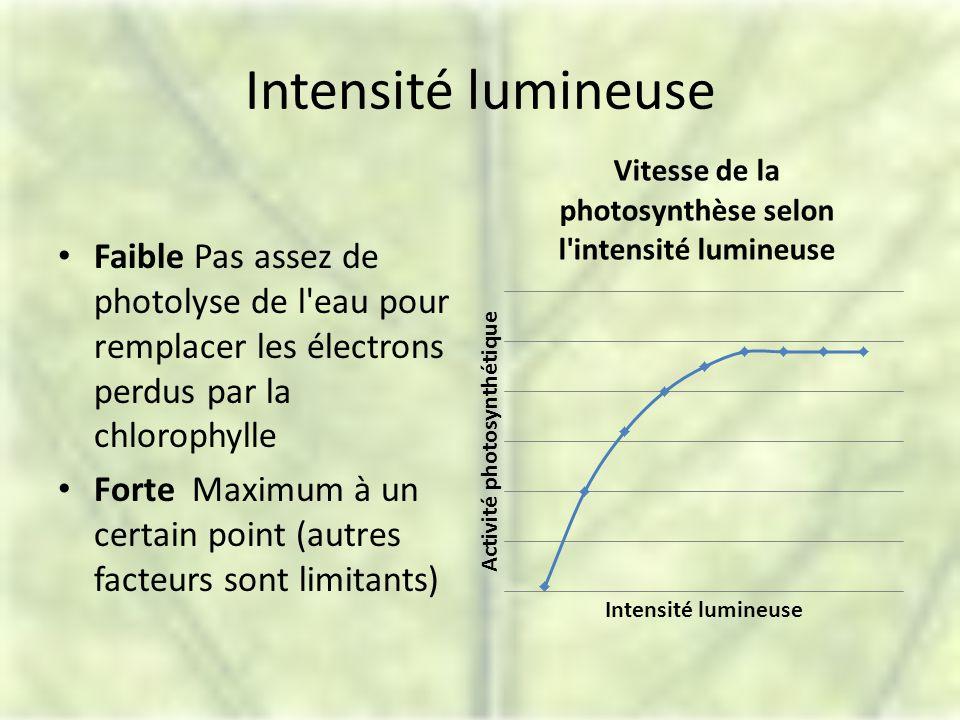 Intensité lumineuse Faible Pas assez de photolyse de l eau pour remplacer les électrons perdus par la chlorophylle.