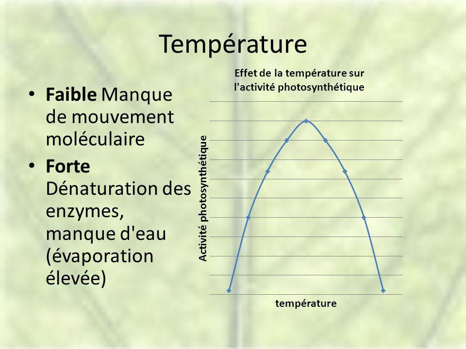 Température Faible Manque de mouvement moléculaire