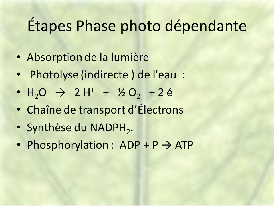 Étapes Phase photo dépendante