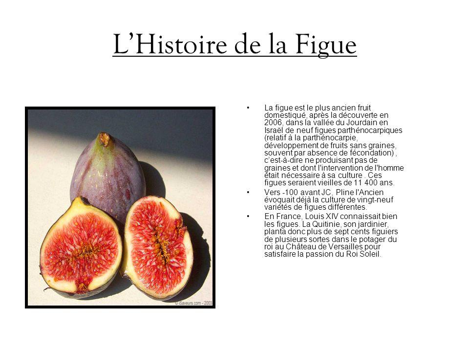 L'Histoire de la Figue
