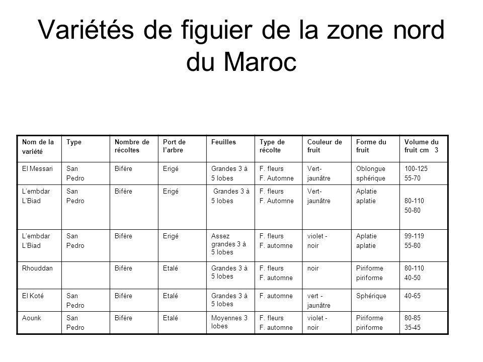 Variétés de figuier de la zone nord du Maroc