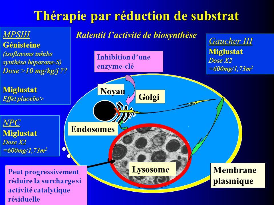 Thérapie par réduction de substrat Ralentit l'activité de biosynthèse