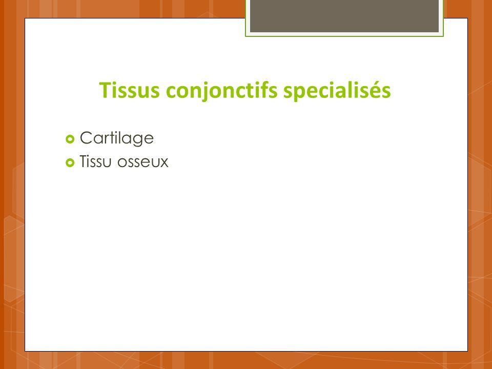 Tissus conjonctifs specialisés