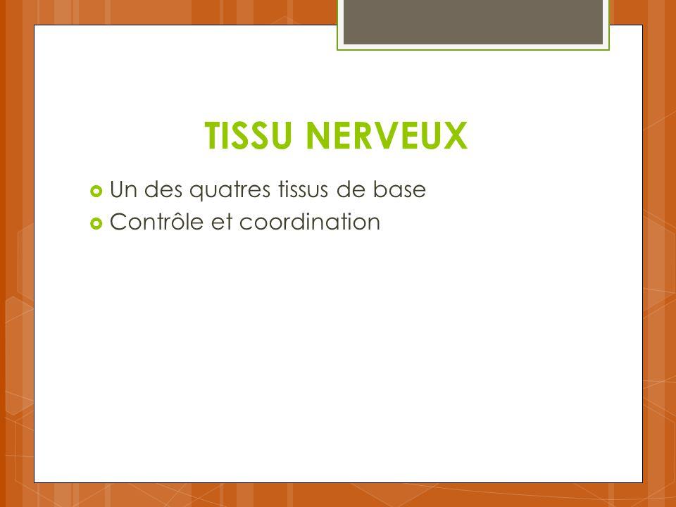 TISSU NERVEUX Un des quatres tissus de base Contrôle et coordination