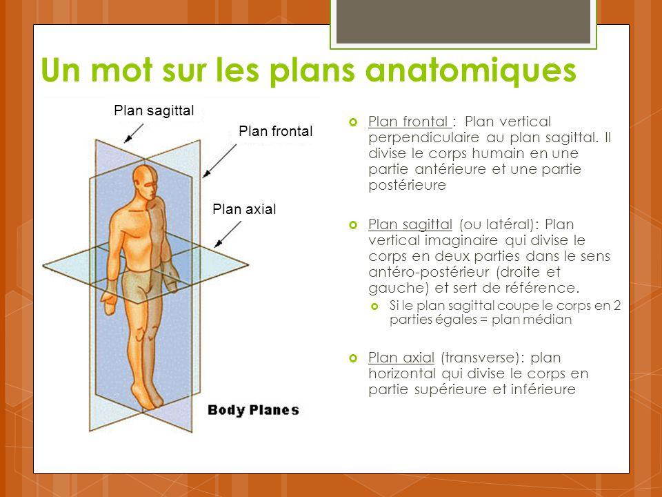 Un mot sur les plans anatomiques