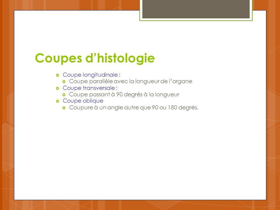 Coupes d'histologie Coupe longitudinale :