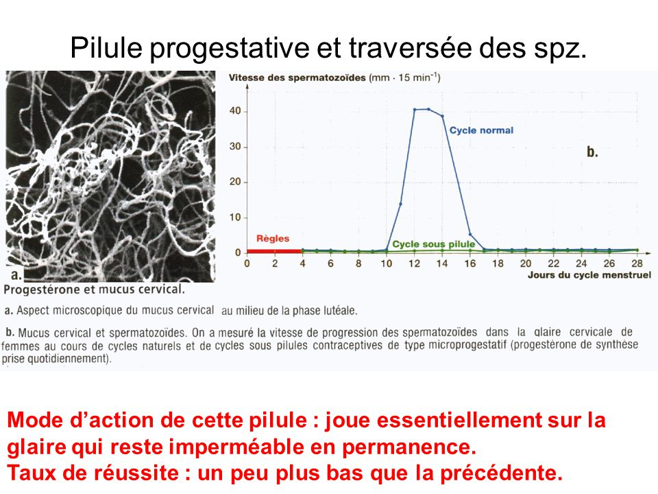 Pilule progestative et traversée des spz.