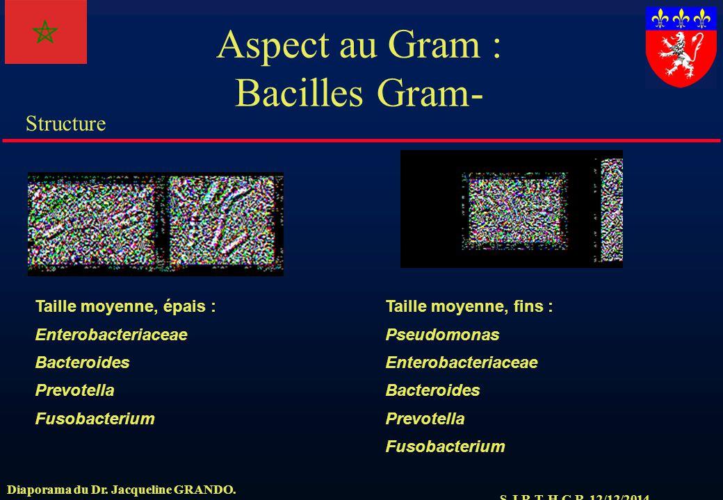 Aspect au Gram : Bacilles Gram-