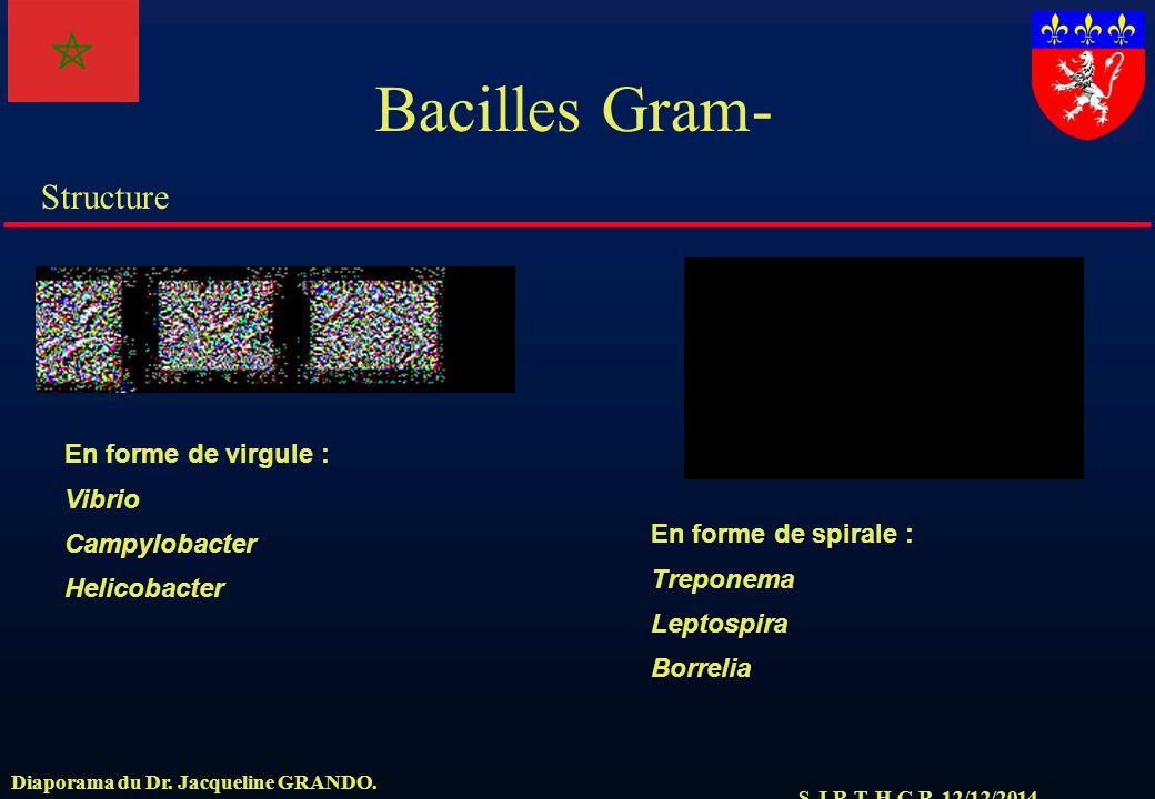 Bacilles Gram- En forme de virgule : Vibrio Campylobacter Helicobacter
