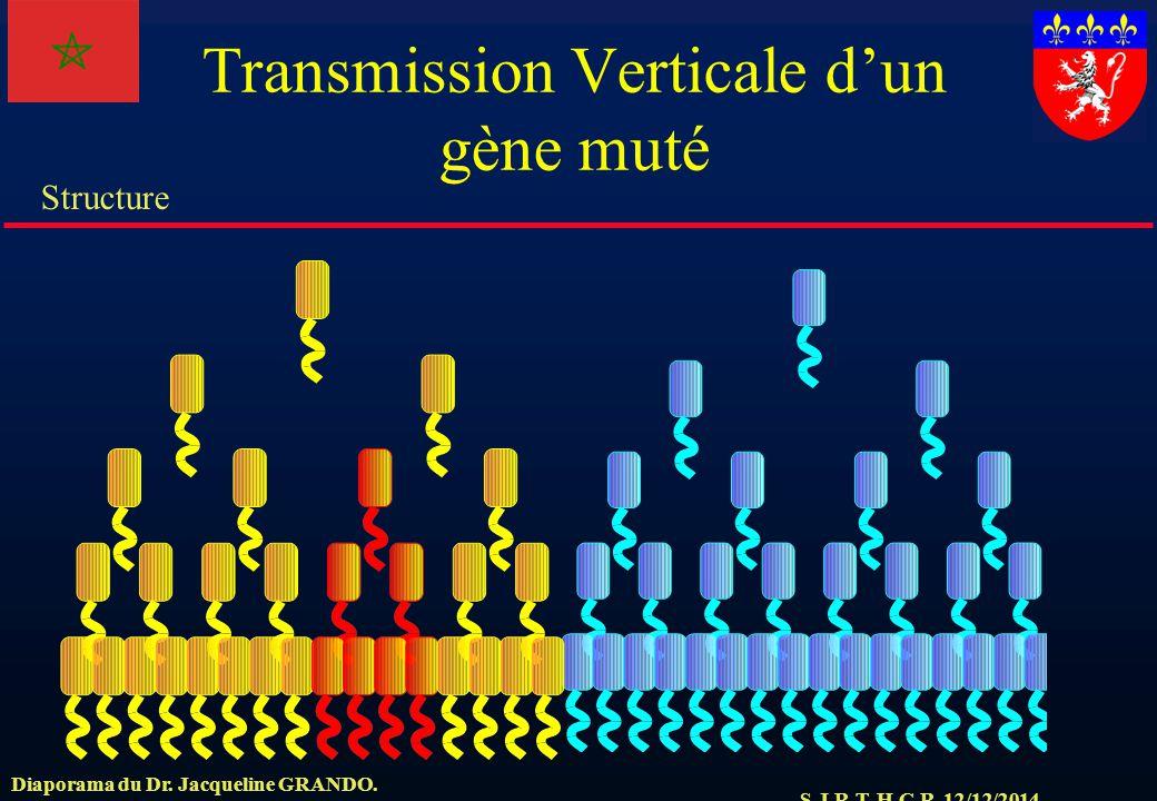 Transmission Verticale d'un gène muté