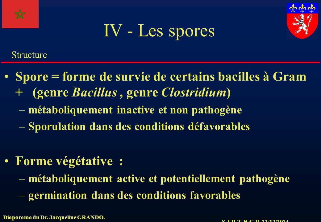 IV - Les spores Spore = forme de survie de certains bacilles à Gram + (genre Bacillus , genre Clostridium)