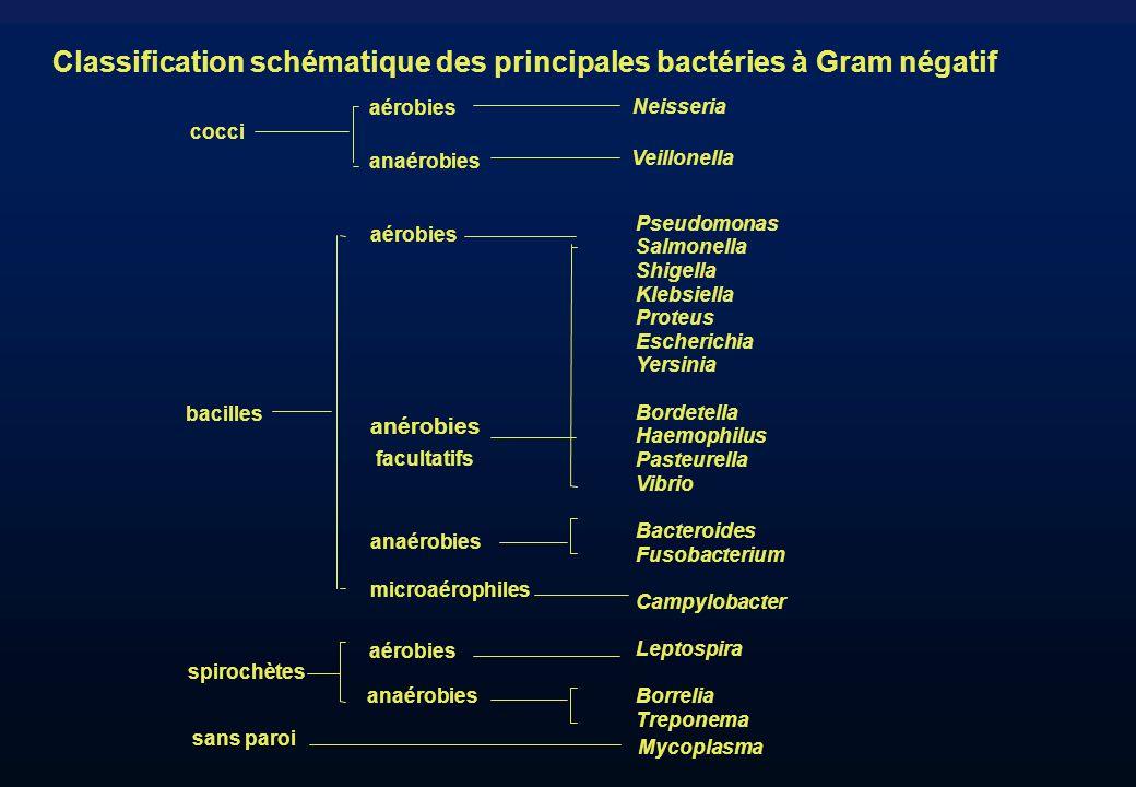 Classification schématique des principales bactéries à Gram négatif