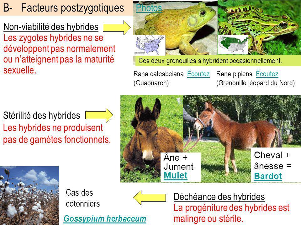 B- Facteurs postzygotiques