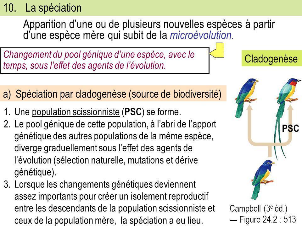 10. La spéciation Apparition d'une ou de plusieurs nouvelles espèces à partir d'une espèce mère qui subit de la microévolution.