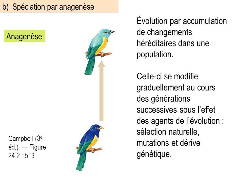 b) Spéciation par anagenèse