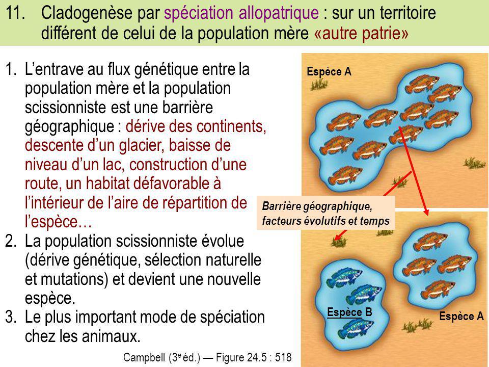 11. Cladogenèse par spéciation allopatrique : sur un territoire différent de celui de la population mère «autre patrie»