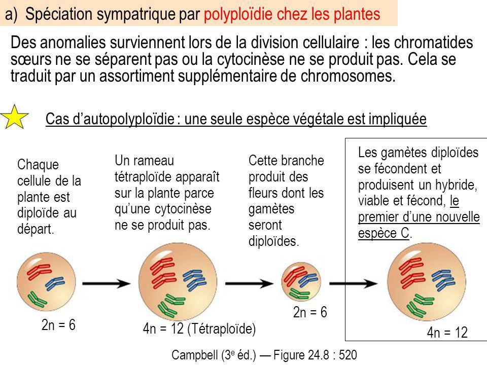 a) Spéciation sympatrique par polyploïdie chez les plantes