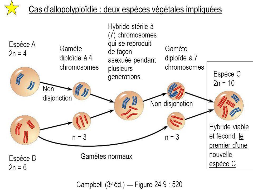 Cas d'allopolyploïdie : deux espèces végétales impliquées