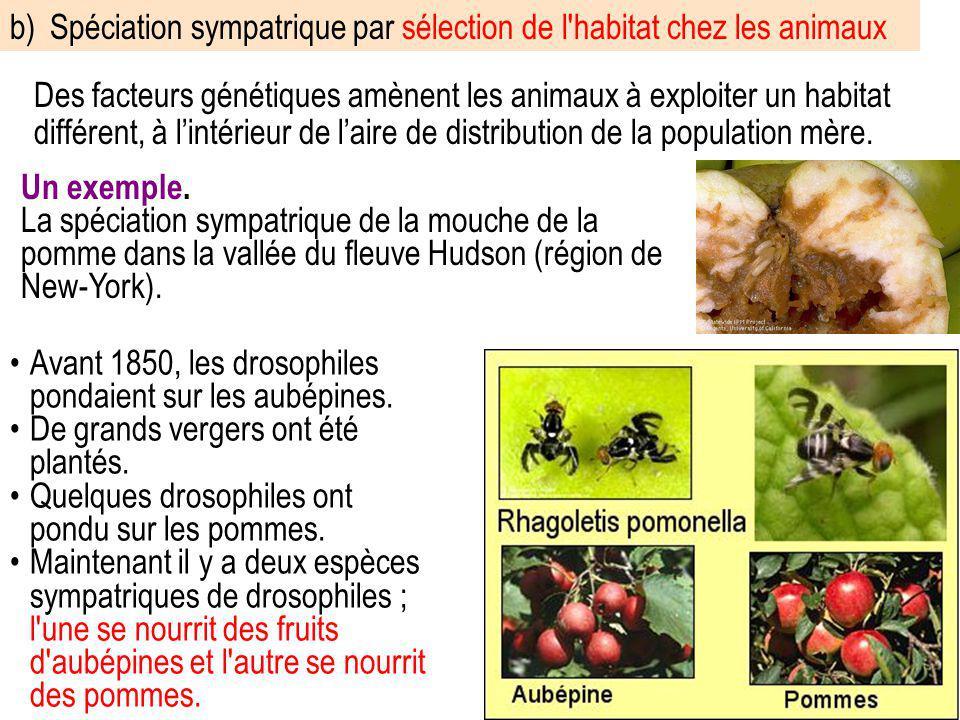 b) Spéciation sympatrique par sélection de l habitat chez les animaux