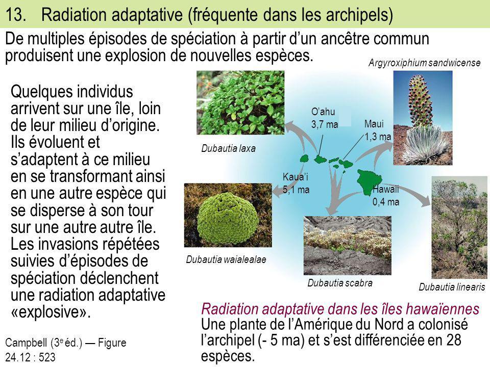 13. Radiation adaptative (fréquente dans les archipels)